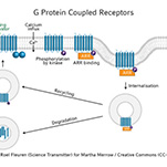 G protein coupled receptor infographic