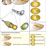Insect Molecular Biology infographic