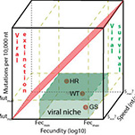 Viral attenuation infographic